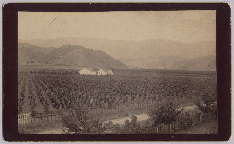 A view of a ranch in Cupertino in 1889. Picture taken from the home of Captain Marithew, whose home was located on McClellan Road. McClellan Road can be seen in the foreground.